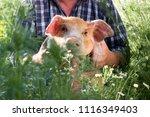 Funny Male Farmer In Plaid...