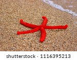 rearrest red starfish from the... | Shutterstock . vector #1116395213