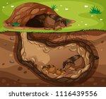 guinea pig family living... | Shutterstock .eps vector #1116439556