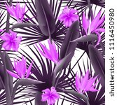 strelitzia reginae blossom also ... | Shutterstock .eps vector #1116450980