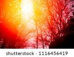 forest under sunset | Shutterstock . vector #1116456419