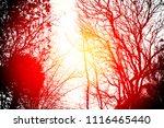 forest under sunset | Shutterstock . vector #1116465440
