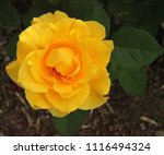 close up outside of single... | Shutterstock . vector #1116494324