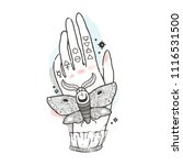sketch graphic illustration... | Shutterstock .eps vector #1116531500