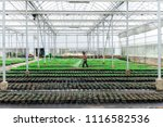 Blurred Worker Watering Plant...