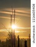 midsummer morning sunrise in... | Shutterstock . vector #1116605408
