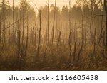 midsummer morning sunrise in... | Shutterstock . vector #1116605438