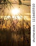 midsummer morning sunrise in... | Shutterstock . vector #1116605510