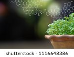 plants background with...   Shutterstock . vector #1116648386