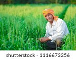 indian farmer holding crop... | Shutterstock . vector #1116673256