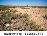 abandoned bird nest on a very... | Shutterstock . vector #1116682598