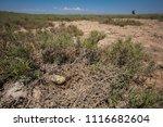 abandoned bird nest on a very... | Shutterstock . vector #1116682604