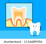 tooth teach about tooth anatomy ... | Shutterstock .eps vector #1116689456