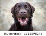portrait of beautiful young... | Shutterstock . vector #1116698246