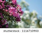 flowers in spring | Shutterstock . vector #1116710903