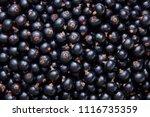 freshly picked home grown... | Shutterstock . vector #1116735359