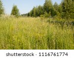 background image of the forest... | Shutterstock . vector #1116761774