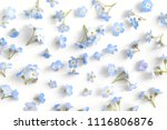 pattern of flowers forget me... | Shutterstock . vector #1116806876