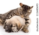 Stock photo the cat embraces a dog isolated on white background 111683693