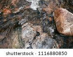 close up details of tropical... | Shutterstock . vector #1116880850
