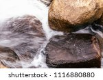 close up details of tropical... | Shutterstock . vector #1116880880