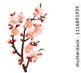 cherry blossom branch abstract... | Shutterstock . vector #1116891959