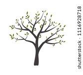 vector illustration of olive... | Shutterstock .eps vector #1116928718
