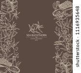 background with sea buckthorn ... | Shutterstock .eps vector #1116935648