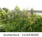 fence in meadow  frisian... | Shutterstock . vector #1116938300