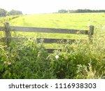 fence in meadow  frisian... | Shutterstock . vector #1116938303