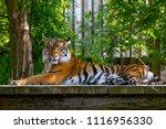 The Portrait Rare Sumatran...