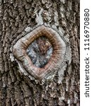 hole in the bark of a tree...   Shutterstock . vector #1116970880
