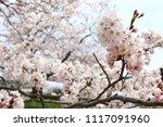 spring cherry blossom | Shutterstock . vector #1117091960