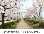 spring cherry blossom | Shutterstock . vector #1117091963