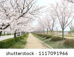 spring cherry blossom | Shutterstock . vector #1117091966