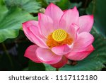 beautiful lotus or lily | Shutterstock . vector #1117112180