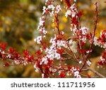 sparrow among plum blossom   Shutterstock . vector #111711956