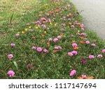 beautiful vibrant colorful... | Shutterstock . vector #1117147694