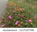 beautiful vibrant colorful... | Shutterstock . vector #1117147700
