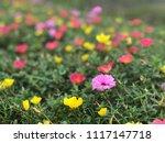 beautiful vibrant colorful... | Shutterstock . vector #1117147718