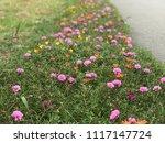 beautiful vibrant colorful... | Shutterstock . vector #1117147724
