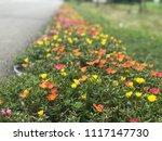 beautiful vibrant colorful... | Shutterstock . vector #1117147730