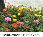 beautiful vibrant colorful... | Shutterstock . vector #1117147778