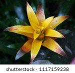 flowers in the botanical... | Shutterstock . vector #1117159238