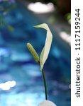 flowers in the botanical... | Shutterstock . vector #1117159244
