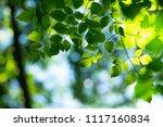 closeup nature view of green... | Shutterstock . vector #1117160834