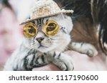 Cute Grey Cat With Sunglasses...