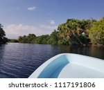 mangrove boat in the oaxaca... | Shutterstock . vector #1117191806