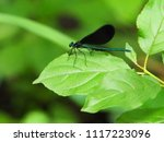 Metallic Blue Dragonfly With...