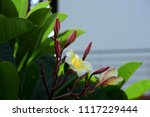 colorful flowers.group of... | Shutterstock . vector #1117229444